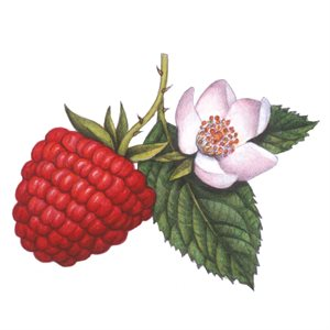 RASPBERRY COMPOUND