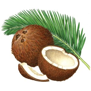 Coconut Compound, 2.2 LB (1 KG)