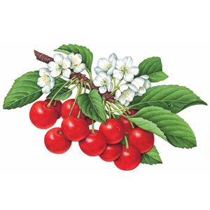 Cherry Compound, 2.2 LB (1 KG)
