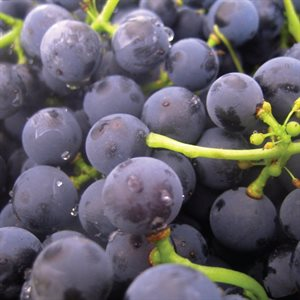 CONCORD GRAPE COMPOUND
