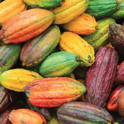 Cocoa-Pods_250x250